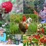 Поздравляем победителей первого этапа конкурса дачных фотографий