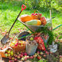 Сезонные работы в саду и огороде: конец августа - начало сентября