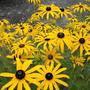 Солнышки в саду